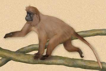 Πίθηκος που μόλις ανακαλύφθηκε στην Τανζανία απειλείται με εξαφάνιση