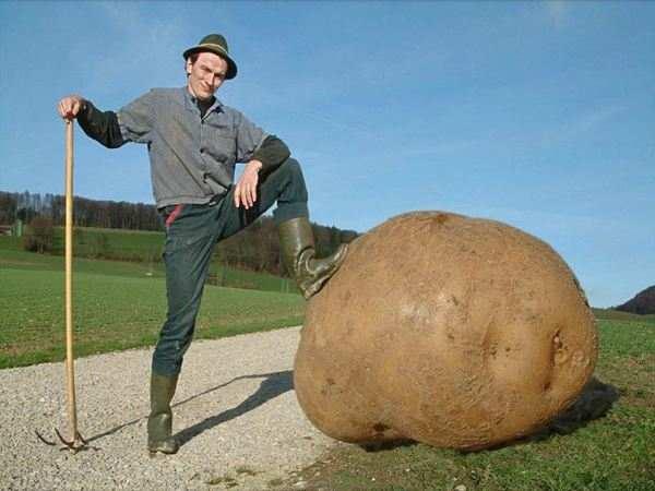 Το κίνημα της πατάτας - η άλλη όψη του νομίσματος
