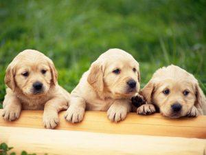 Σκυλιά έσωσαν μικρό παιδί